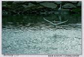 350 +小白 拍淡水:DSC00875.jpg