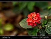 春一番:DSC01863.jpg