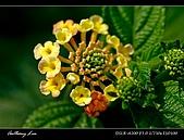 春一番:DSC01868.jpg