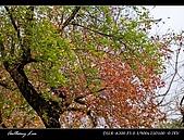 春一番:DSC01873.jpg