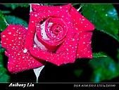 雨後春筍:DSC06701.jpg