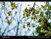 春一番:DSC01877.jpg