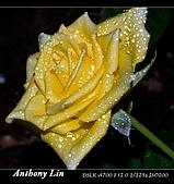 雨後春筍:DSC06706.jpg