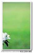 榮星花園杜鵑花開:DSC02607.jpg