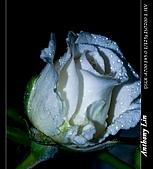 雨後春筍:DSC06727.jpg