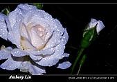 雨後春筍:DSC06728.jpg