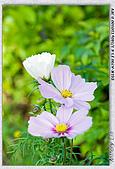 大安森林公園台北花卉展:DSC07556.jpg