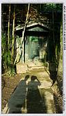 士林官邸菊花展:DSC03097.jpg