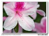 榮星花園杜鵑花開:DSC02612.jpg