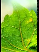 生態花卉照片:DSC00031aaa.jpg
