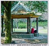 陽明山楓葉--略紅:DSC06945.jpg