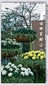 士林官邸菊花展:DSC03114.jpg