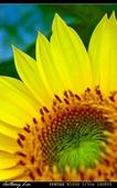 生態花卉照片:IMGP1075aaa.jpg