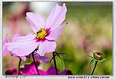 大安森林公園台北花卉展:DSC07574.jpg