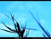 生態花卉照片:75681336.jpg