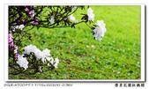榮星花園杜鵑花開:DSC02588.jpg