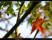 生態花卉照片:76098156.jpg