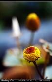 生態花卉照片:DSC00026aaa.jpg