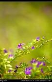 生態花卉照片:76098157.jpg