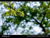 春一番:DSC01880.jpg