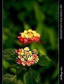 春一番:DSC01881.jpg