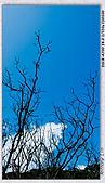 陽明山楓葉--略紅:DSC06949.jpg