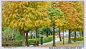 大安森林公園台北花卉展:DSC09697dd.jpg