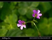 春一番:DSC01884.jpg