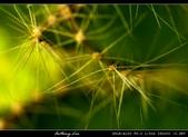 生態花卉照片:76700045.jpg