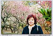 梅林寺 梅滿開:DSC00494.jpg