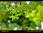 春一番:DSC01923.jpg