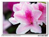 榮星花園杜鵑花開:DSC02618.jpg