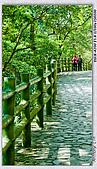 陽明山楓葉--略紅:DSC06962.jpg