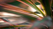 雜拍  ZEISS 135 F1.8 :DSC01643.jpg