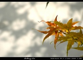 生態花卉照片:76706046.jpg