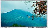 陽明山楓葉--略紅:DSC06973.jpg