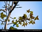 春一番:DSC01956.jpg