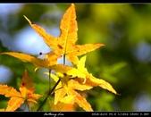 生態花卉照片:76706047.jpg