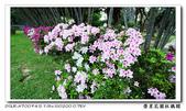 榮星花園杜鵑花開:DSC02631.jpg