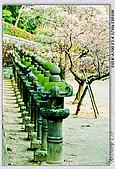 梅林寺 梅滿開:DSC00592.jpg