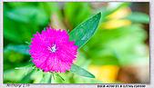 大安森林公園台北花卉展:DSC07535.jpg