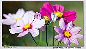 大安森林公園台北花卉展:DSC07538ss.jpg