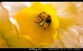 生態花卉照片:水仙花開
