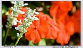 大安森林公園台北花卉展:DSC07543ss.jpg