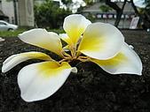 20080507巴里島:彩繪陶藝中心
