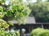 東海大學隨便拍:P1150582.jpg