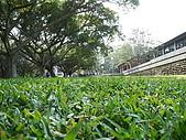 東海大學隨便拍:P1150528.jpg