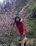 2008 南投杉林溪:站在sakura樹下ㄉ我