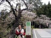 阿里山櫻花季:阿里山賓館前