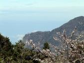 阿里山櫻花季:阿里山的黃昏